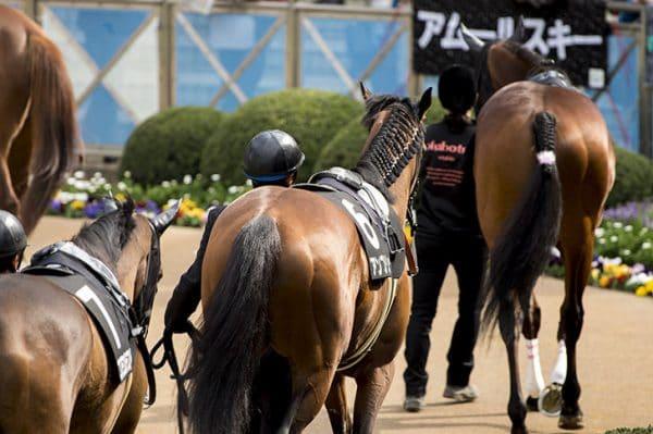 パドック 競走馬