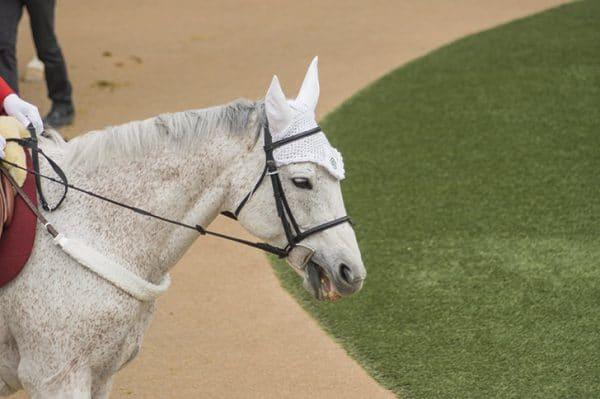 パドック 誘導馬